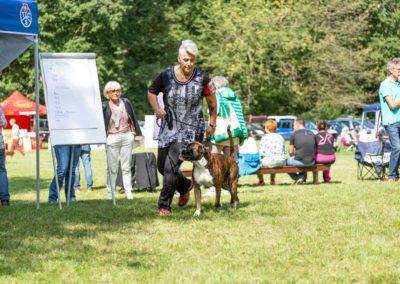 SwissBoxer-DogShow-2019-©BoxerClubGVA-(290)