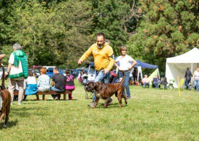 SwissBoxer-DogShow-2019-©BoxerClubGVA-(291)