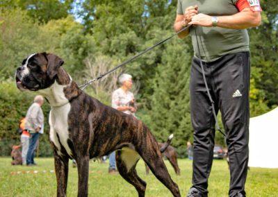 SwissBoxer-DogShow-2019-©BoxerClubGVA-(292)
