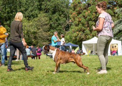 SwissBoxer-DogShow-2019-©BoxerClubGVA-(293)