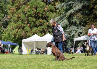 SwissBoxer-DogShow-2019-©BoxerClubGVA-(295)