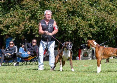 SwissBoxer-DogShow-2019-©BoxerClubGVA-(297)