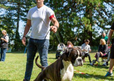 SwissBoxer-DogShow-2019-©BoxerClubGVA-(298)