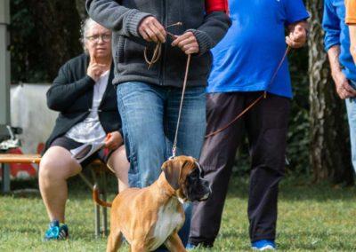 SwissBoxer-DogShow-2019-©BoxerClubGVA-(30)