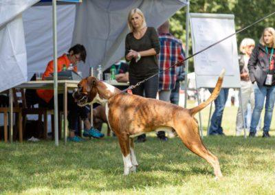 SwissBoxer-DogShow-2019-©BoxerClubGVA-(302)