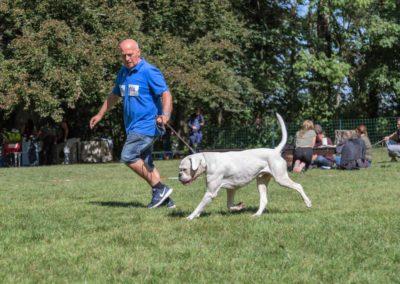 SwissBoxer-DogShow-2019-©BoxerClubGVA-(308)