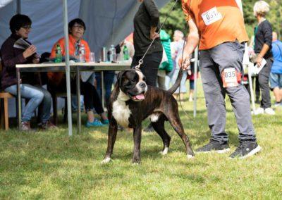 SwissBoxer-DogShow-2019-©BoxerClubGVA-(309)