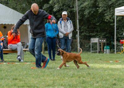SwissBoxer-DogShow-2019-©BoxerClubGVA-(31)