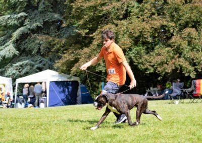 SwissBoxer-DogShow-2019-©BoxerClubGVA-(310)
