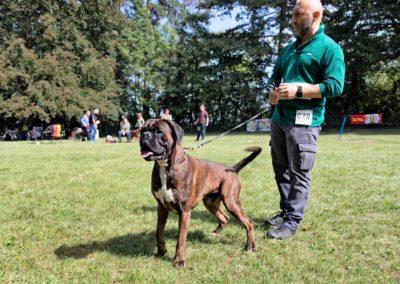 SwissBoxer-DogShow-2019-©BoxerClubGVA-(311)