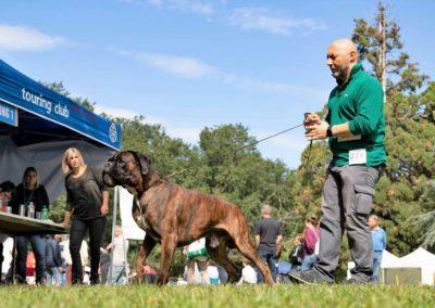 SwissBoxer-DogShow-2019-©BoxerClubGVA-(312)