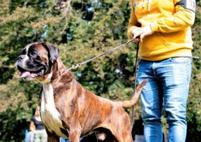 SwissBoxer-DogShow-2019-©BoxerClubGVA-(316)