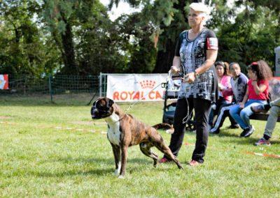 SwissBoxer-DogShow-2019-©BoxerClubGVA-(318)