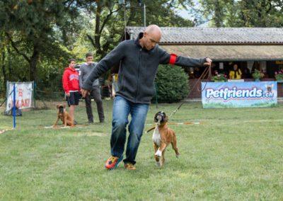 SwissBoxer-DogShow-2019-©BoxerClubGVA-(32)