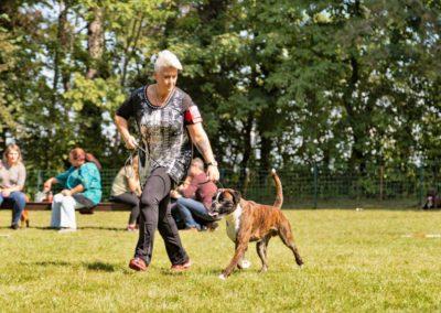 SwissBoxer-DogShow-2019-©BoxerClubGVA-(323)
