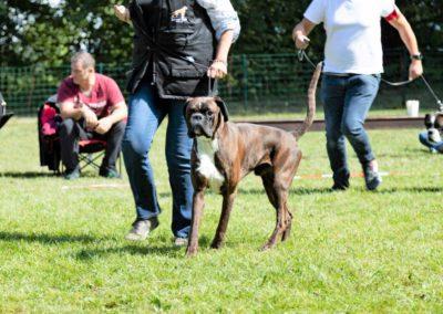 SwissBoxer-DogShow-2019-©BoxerClubGVA-(324)