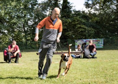 SwissBoxer-DogShow-2019-©BoxerClubGVA-(325)
