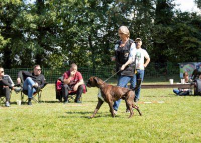 SwissBoxer-DogShow-2019-©BoxerClubGVA-(327)