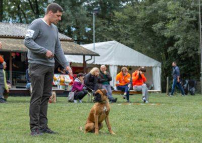 SwissBoxer-DogShow-2019-©BoxerClubGVA-(34)