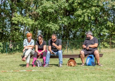 SwissBoxer-DogShow-2019-©BoxerClubGVA-(340)