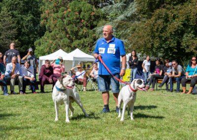 SwissBoxer-DogShow-2019-©BoxerClubGVA-(352)
