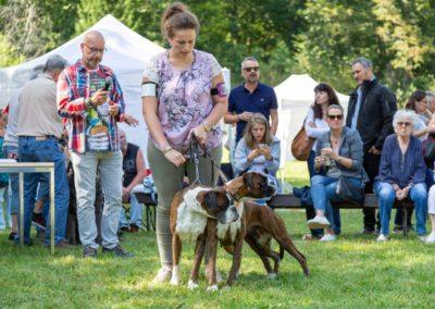 SwissBoxer-DogShow-2019-©BoxerClubGVA-(354)