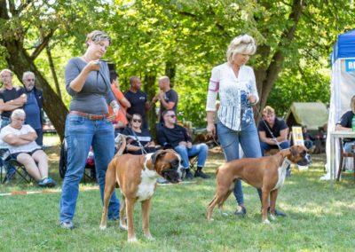 SwissBoxer-DogShow-2019-©BoxerClubGVA-(356)