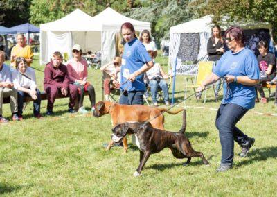 SwissBoxer-DogShow-2019-©BoxerClubGVA-(358)