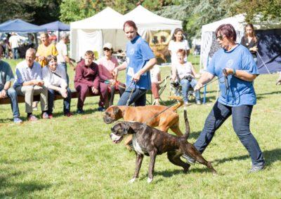 SwissBoxer-DogShow-2019-©BoxerClubGVA-(359)