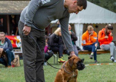 SwissBoxer-DogShow-2019-©BoxerClubGVA-(36)