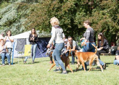 SwissBoxer-DogShow-2019-©BoxerClubGVA-(360)