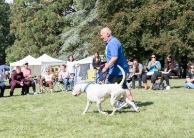 SwissBoxer-DogShow-2019-©BoxerClubGVA-(362)