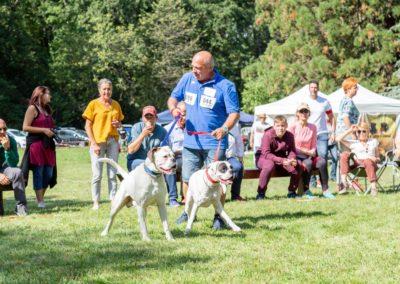 SwissBoxer-DogShow-2019-©BoxerClubGVA-(363)