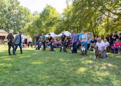 SwissBoxer-DogShow-2019-©BoxerClubGVA-(368)