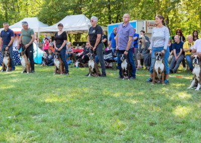 SwissBoxer-DogShow-2019-©BoxerClubGVA-(369)