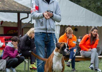 SwissBoxer-DogShow-2019-©BoxerClubGVA-(37)