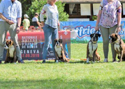 SwissBoxer-DogShow-2019-©BoxerClubGVA-(371)