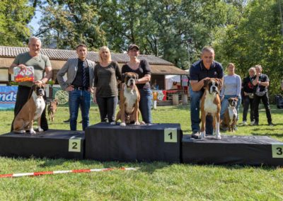 SwissBoxer-DogShow-2019-©BoxerClubGVA-(372)