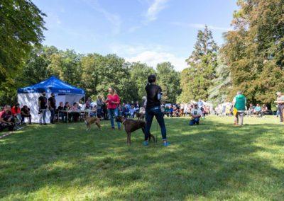 SwissBoxer-DogShow-2019-©BoxerClubGVA-(373)