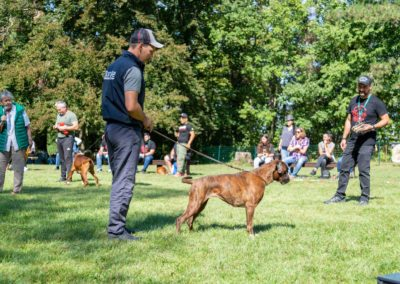 SwissBoxer-DogShow-2019-©BoxerClubGVA-(374)