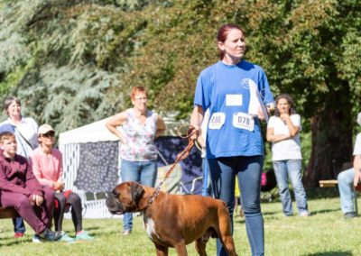 SwissBoxer-DogShow-2019-©BoxerClubGVA-(375)
