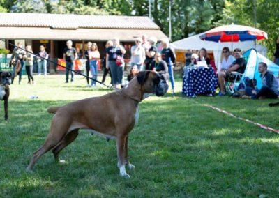 SwissBoxer-DogShow-2019-©BoxerClubGVA-(377)