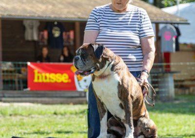 SwissBoxer-DogShow-2019-©BoxerClubGVA-(379)