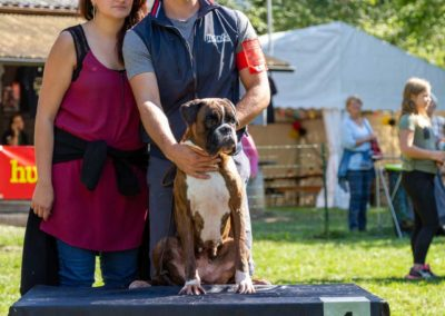 SwissBoxer-DogShow-2019-©BoxerClubGVA-(381)