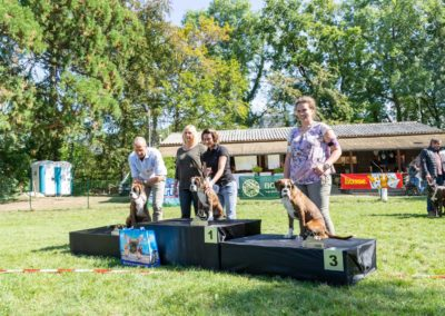 SwissBoxer-DogShow-2019-©BoxerClubGVA-(385)