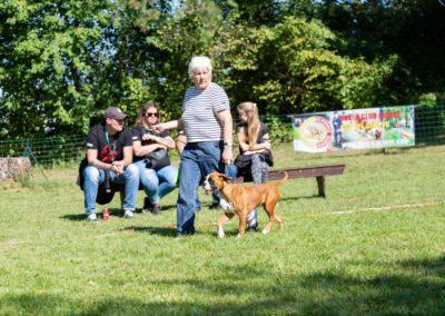 SwissBoxer-DogShow-2019-©BoxerClubGVA-(388)