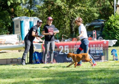 SwissBoxer-DogShow-2019-©BoxerClubGVA-(389)