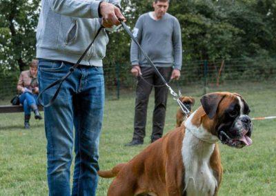SwissBoxer-DogShow-2019-©BoxerClubGVA-(39)