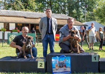 SwissBoxer-DogShow-2019-©BoxerClubGVA-(392)