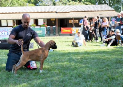 SwissBoxer-DogShow-2019-©BoxerClubGVA-(393)
